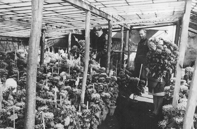 Les serres de l'entreprise Moncorgé au début du 20° siècle